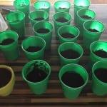 semillas plantadas!