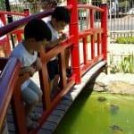 dando de comer a los tortugas